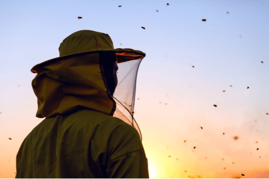 colony collapse disorder bees
