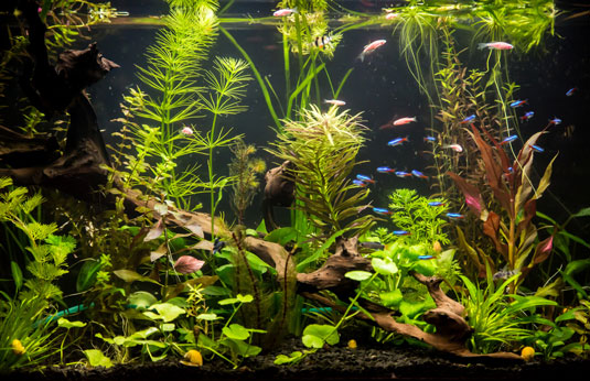 freshwater aquarium with fish