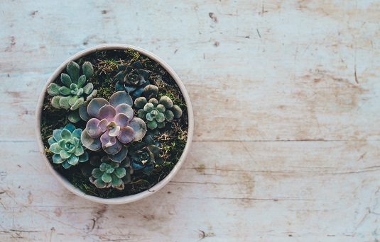 How to grow a succulent