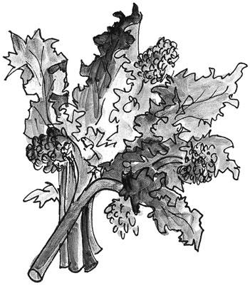mediterranean-broccoli