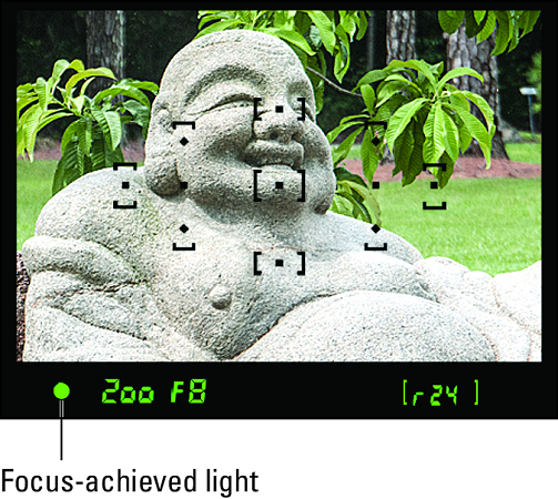 autofocusing Nikon D3500