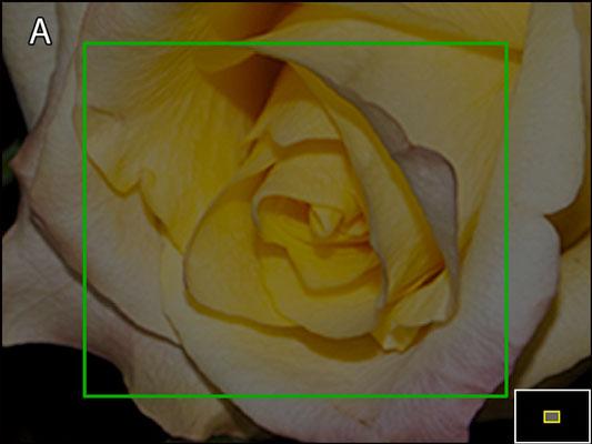 nikond-zooming