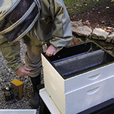 Opening Your Beehive