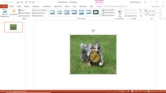 Picture Tools Format tab PowerPoint 2019