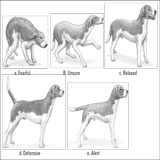 puppy postures
