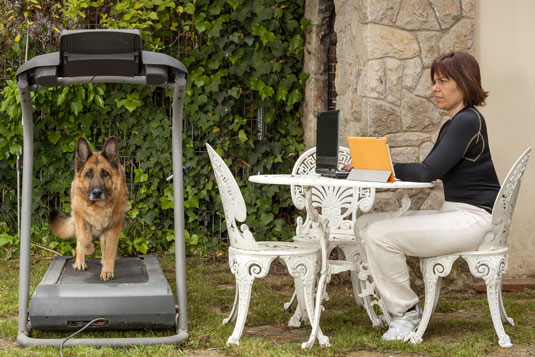 treadmills for dogs