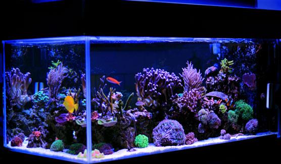R Aquariums For Dummies Cheat