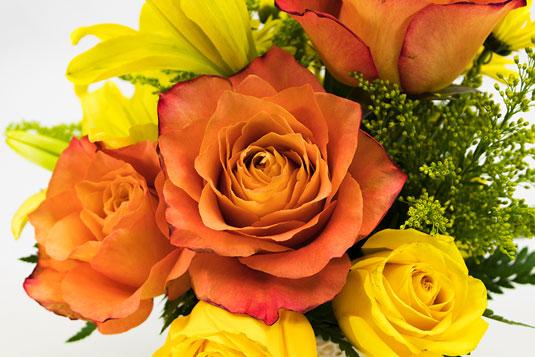 slrphoto-flowers