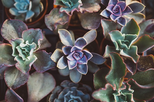 Succulents are plants that store water and are low maintenance.